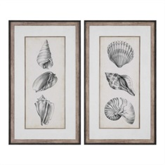 Antique Shell Prints, S/2