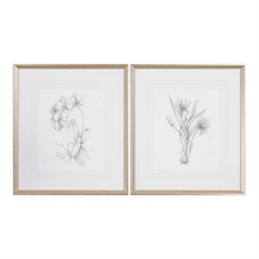 Botanical Sketches Framed Prints S/2