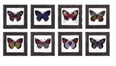 Butterfly Framed Glass Wall Décor - Ast 8