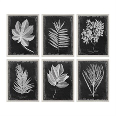 Foliage Framed Prints S/6