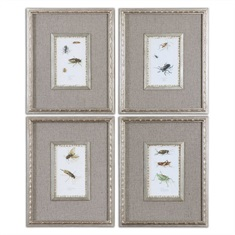 Insect Study Framed Art, S/4