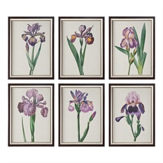 Iris Beauties Floral Prints S/6