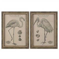 Natural History Framed Art, S/2