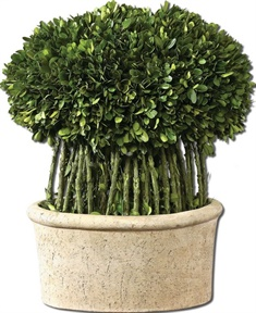 Uttermost Willow Topiary Preserved Boxwood